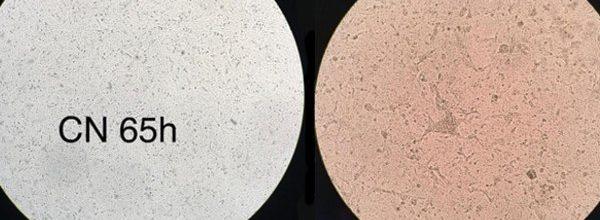 Pesquisadores-da-USP-produzem-coronavírus-em-laboratório-Notícias